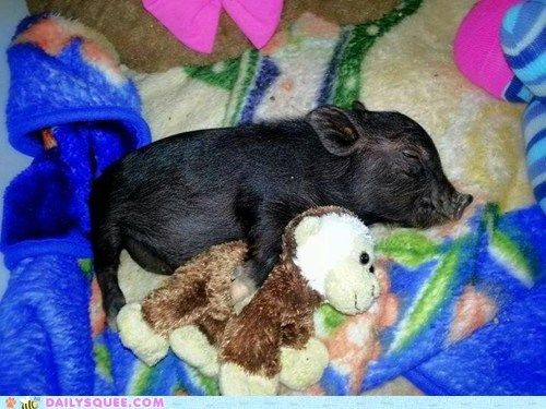 Daily Squee: Reader Squee: Spooning