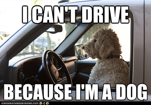because,cant,captions,cars,dogs,driving,Sad