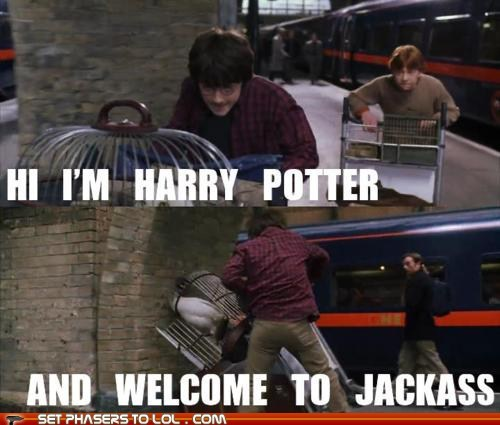 crash,Daniel Radcliffe,Harry Potter,hedwig,jackass,Ron Weasley,rupert grint,stunt,wall