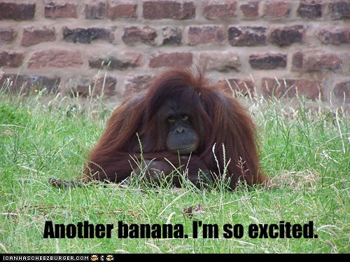banana,bored,captions,excited,orangutan,same thing over and over,sarcasm