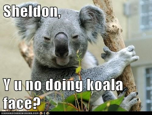 Sheldon,  Y u no doing koala face?