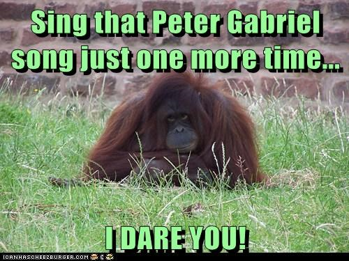 Sing that Peter Gabriel song just one more time...  I DARE YOU!