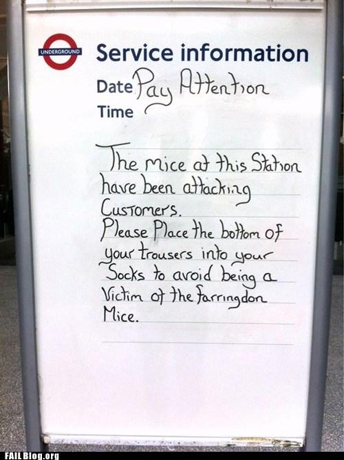 bus stop,mice,notice,warning