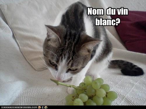 captions,Cats,grapes,nom,wine