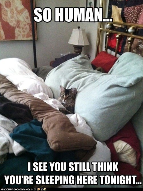 beds,blankets,captions,Cats,comfort,comfortable,Deal With It,lolcats,pillows,sleeping,tucked in