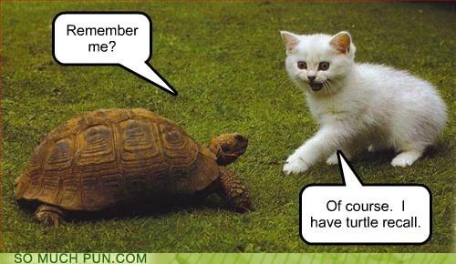 bad joke is bad,literalism,recall,similar sounding,total,total recall,turtle