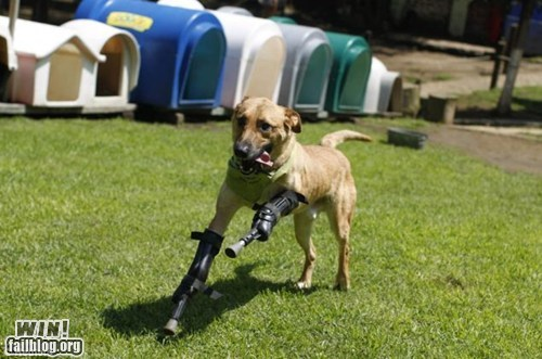 Completely Relevant News: Bionic Doggie!