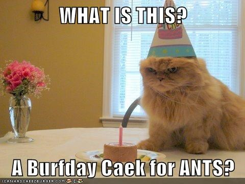 WHAT IS THIS?  A Burfday Caek for ANTS?