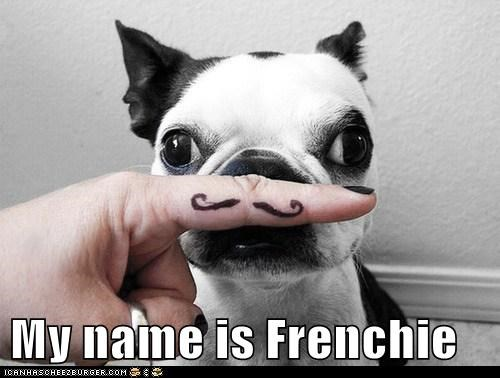 My name is Frenchie