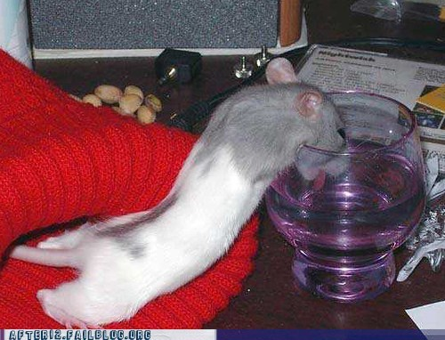 Crunk Critters: Mouse You Are Drunk