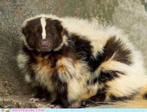 skunk,fro,floofy,hairdo,keeping warm,squee