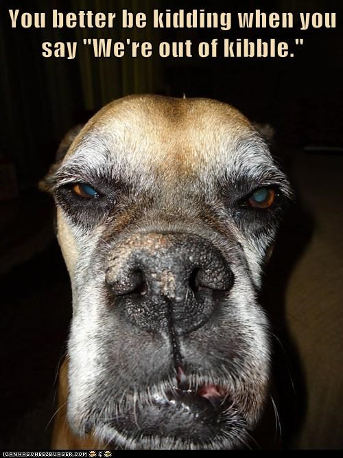 dogs,what breed,kibble,youre-kidding,no food,angry