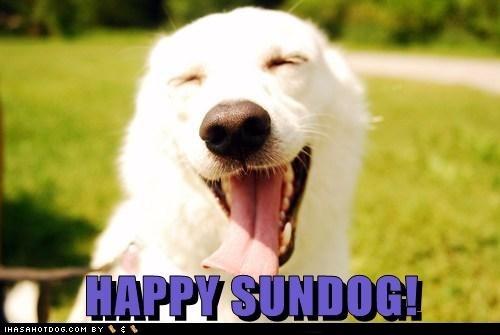 dogs,happy sundog,smile,Sundog,sunshine,tongue,what breed