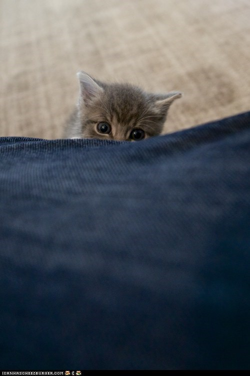 Cyoot Kitteh of teh Day: Lil' Peeker