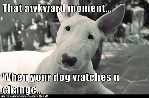 That awkward moment...  When your dog watches u change...