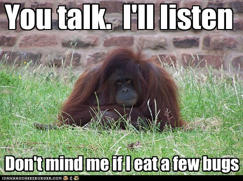 bored,bugs,distracted,eating,listen,not paying attention,orangutan,talk