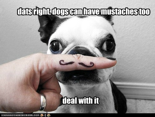 dats right, dogs can have mustaches too