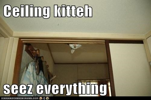 Ceiling kitteh  seez everything