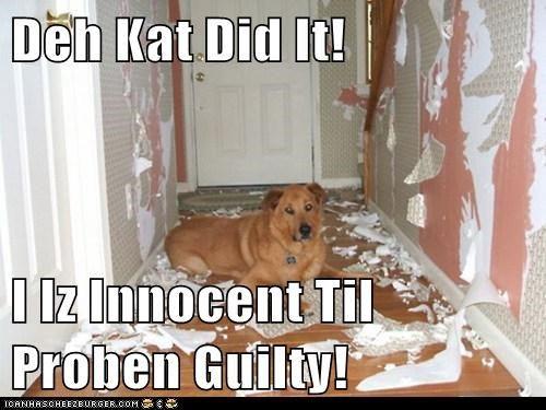 Deh Kat Did It!  I Iz Innocent Til Proben Guilty!