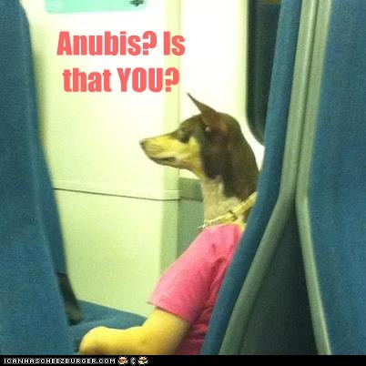 anubis,captions,dog head,dogs,egyptian god,train,what breed