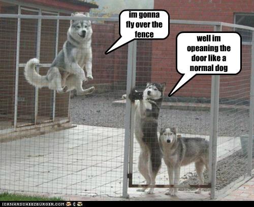 captions,dogs,door,flying,hover dog,huskie,husky,levitate,pen