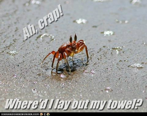 beach,crab,crap,lost,small,sunscreen,tiny,towel