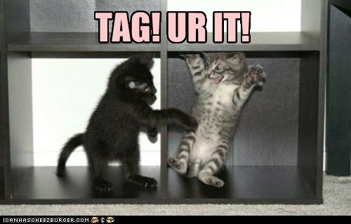 captions,Cats,games,jump,play,playground,surprise,tag