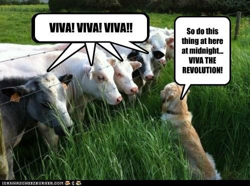 commander,cows,dogs,revolution,uprising,viva