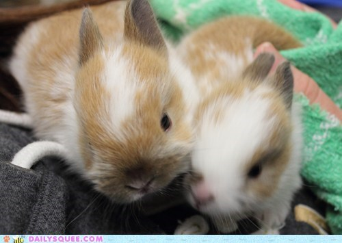 bunny,happy bunday,rabbit,reader squee,rescue,shelter,sisters