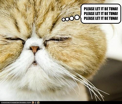 captions,Cats,please,tuna,wish,wishful thinking
