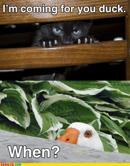 duck,SOON,when