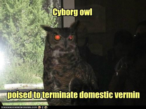 cyborg,domestic,evil-terminate,Owl,red eyes,vermin