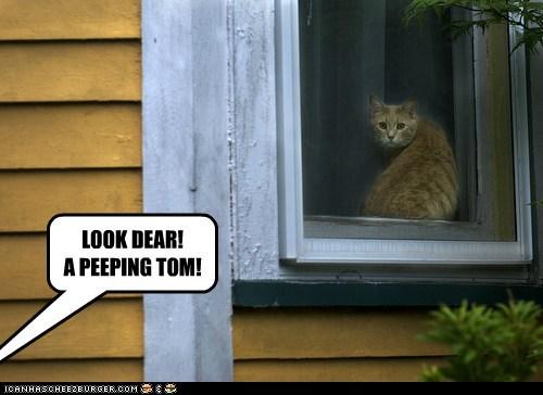 captions,Cats,look,peep,peeping tom,tom,tom cat,window