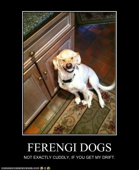 FERENGI DOGS