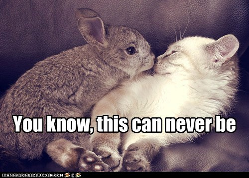 bunny,captions,Cats,fate,forbidden love,love,romance