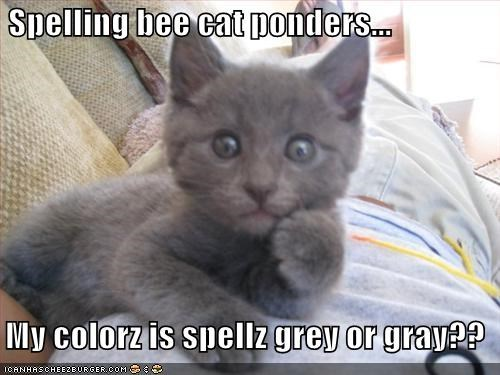 Spelling bee cat ponders...    My colorz is spellz grey or gray??