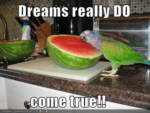 come true,dreams,happy,hugging,parrot,watermelon