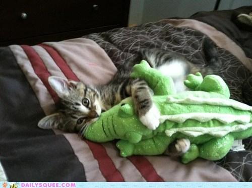 alligator,cat,kitten,pet,reader squee,stuffed animal,toy,wrestle