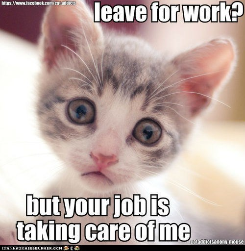 captions,Cats,jobs,leaving,lolcats,lonely,Sad,taking care