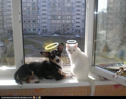 Cats,dogs,goggies r owr friends,halos,heavenly,innocent,Interspecies Love