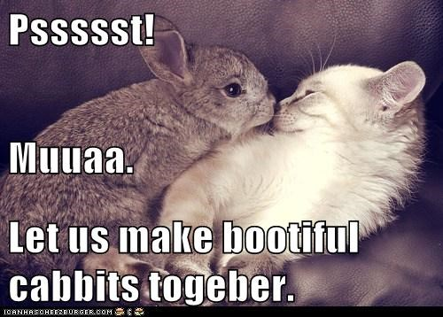 Pssssst! Muuaa. Let us make bootiful cabbits togeber.