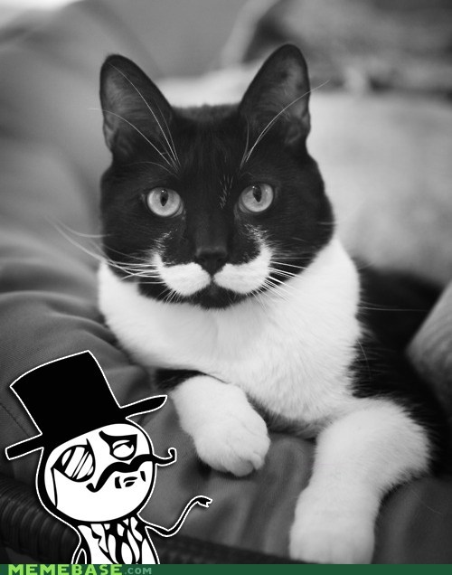 Cats,hats off,sir,puns