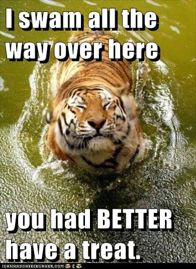 eating,hungry,lake,swimming,tiger,treat,youd-better
