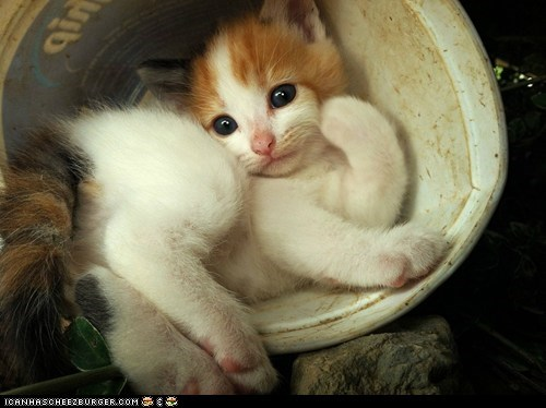 butts,Cats,cyoot kitteh of teh day,kitten,posing,pots,strike a pose