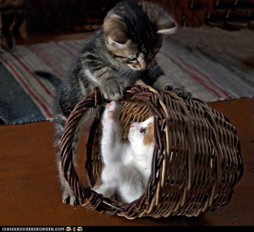 baskets,Cats,cyoot kitteh of teh day,friends,kitten,playing,two cats,wicker