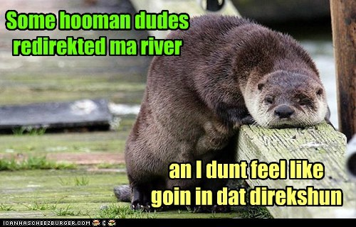 direction,dont-feel-like-it,otter,redirect,river,Sad,water
