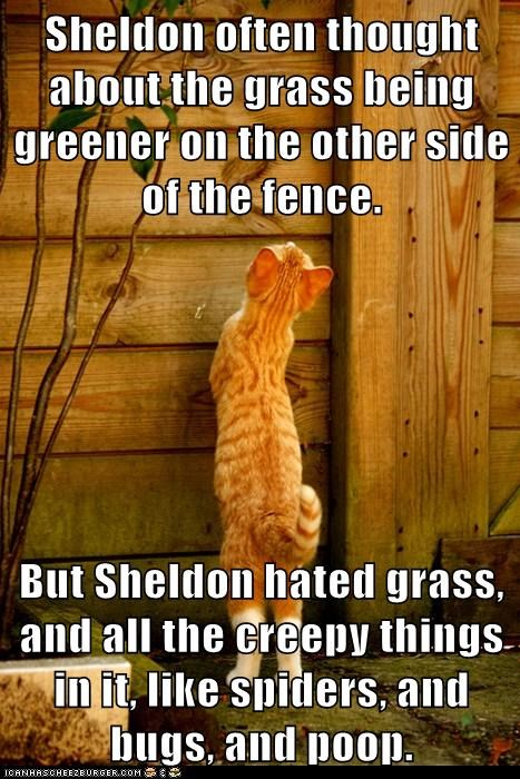 Sheldon often thought about the grass being greener on the other side of the fence.  But Sheldon hated grass, and all the creepy things in it, like spiders, and bugs, and poop.