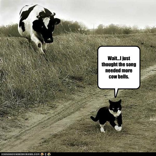 cat,cow,chasing,cowbell,saturday night live,song,angry