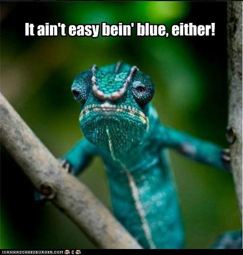 bitter,chameleon,its-not-easy-being-green,kermit,lizard
