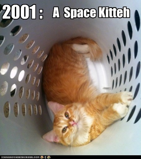 2001,2001 A Space Oddysey,captions,Cats,Movie,reference,sci fi,space